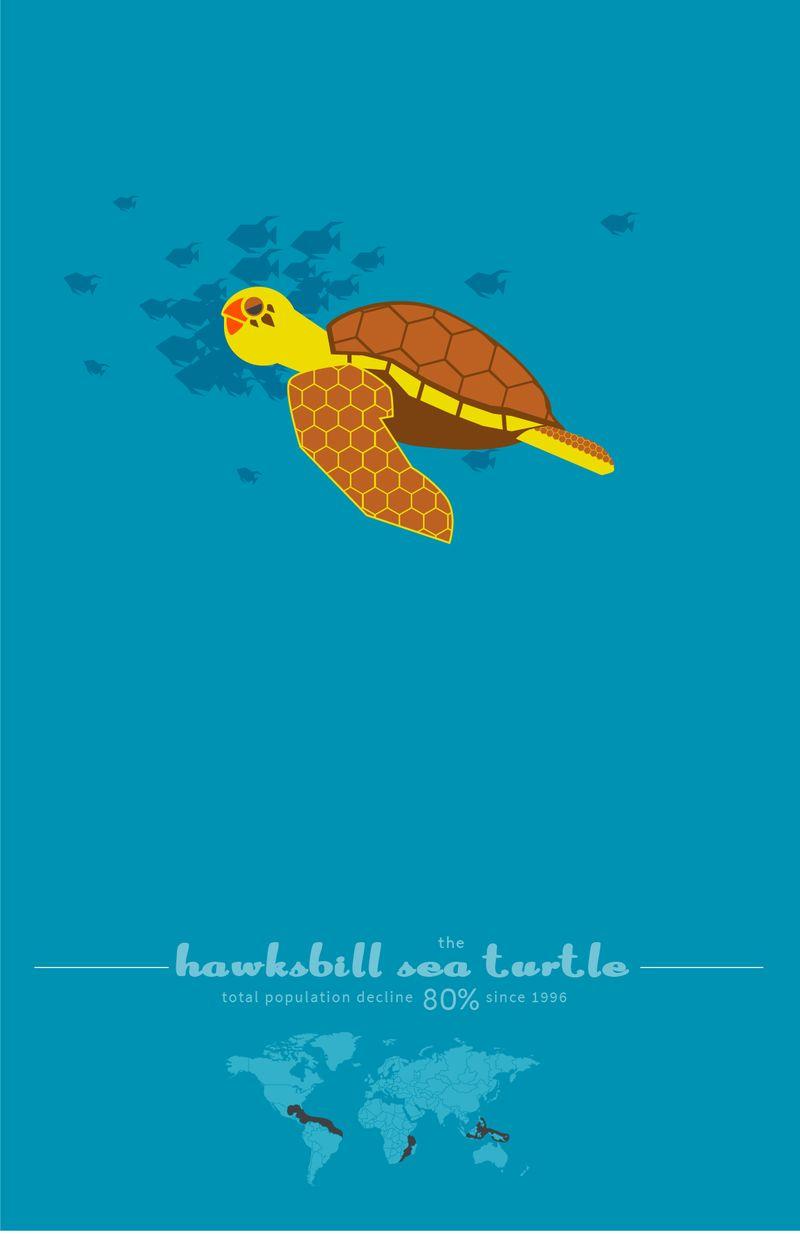 Endangered Sea Turtle